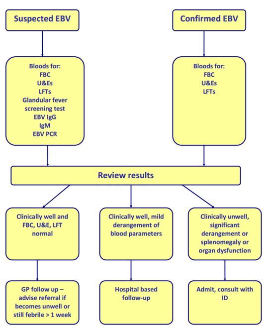 Epstein-Barr virus (EBV) guidance
