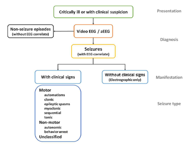 Seizures in the neonate
